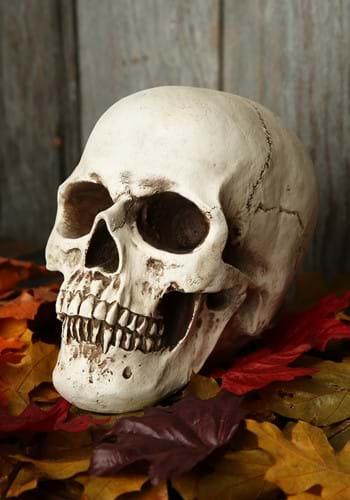 Realistic Deluxe Skull Prop