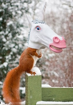 Unicorn Squirrel Feeder Alt 1